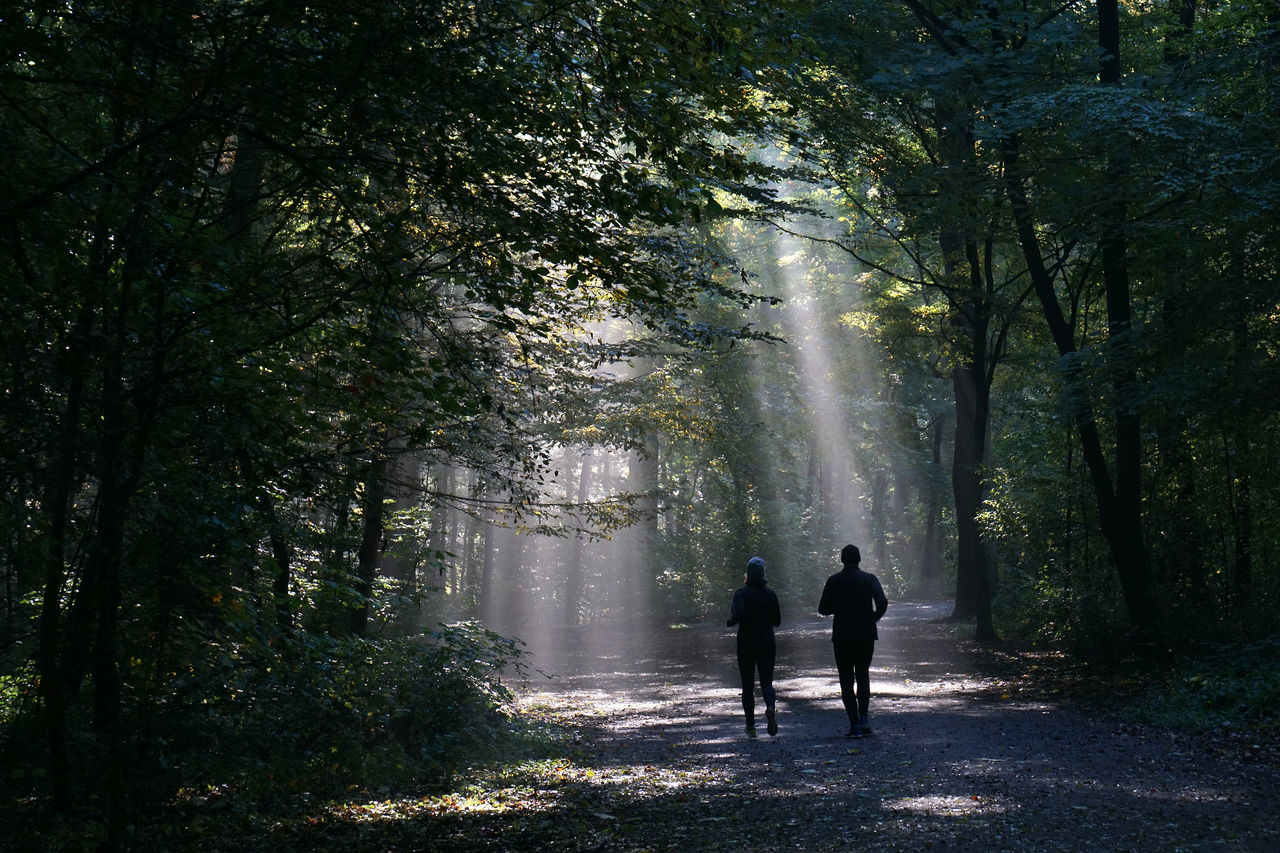 Beauty In Nature Couple Fitness Fog Foggy Forest Jogging Lifestyle Light And Shadow Magic Mystery Nature Outdoors People Person Rear View Running Silhouette Sports Sun Sunbeam Tree Two People Unrecognizable Woods
