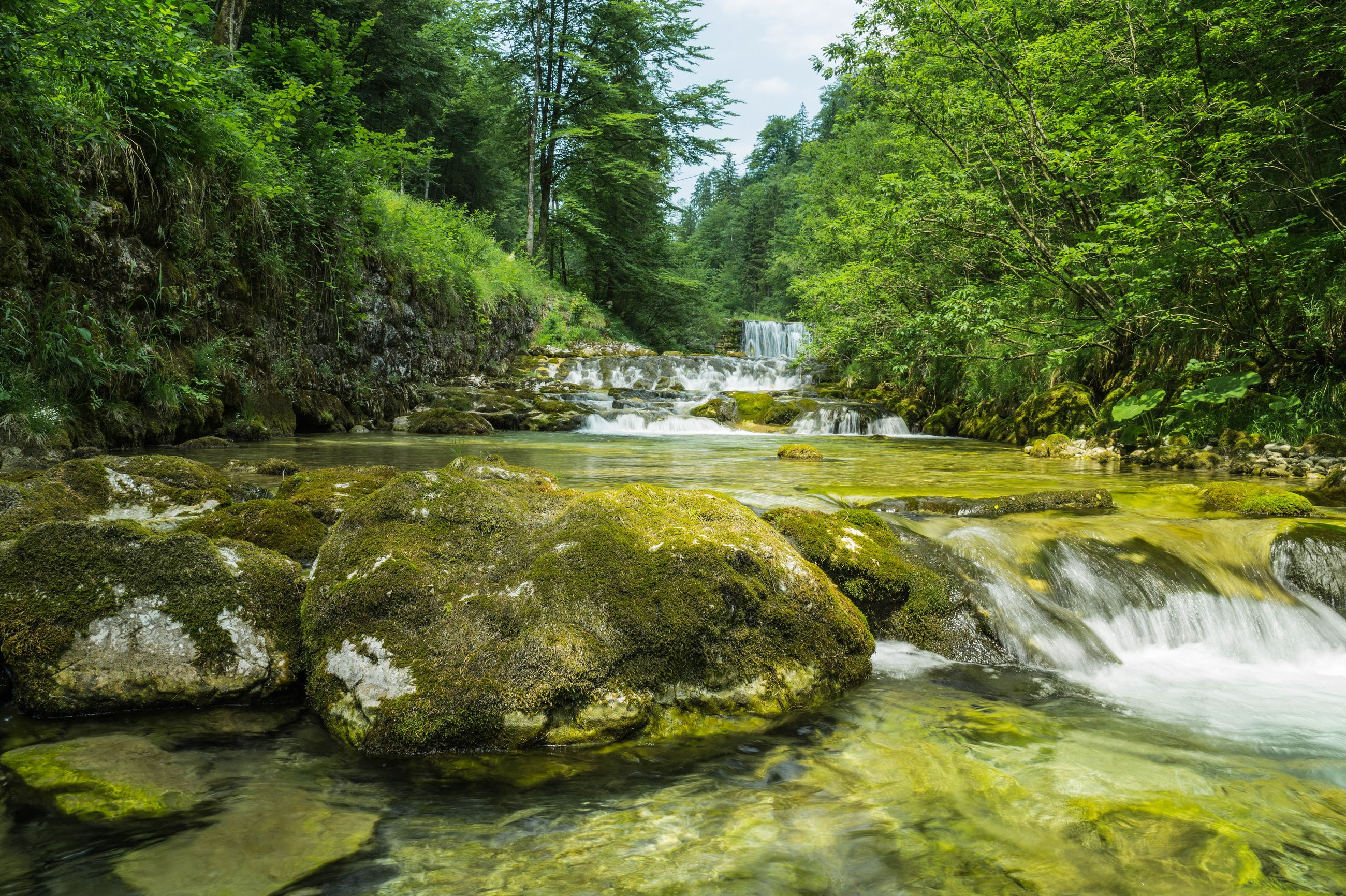 tree, nature, forest, beauty in nature, rock - object, tranquil scene, lush foliage, tranquility, water, no people, scenics, outdoors, green color, river, growth, day, travel destinations, landscape, waterfall, sky