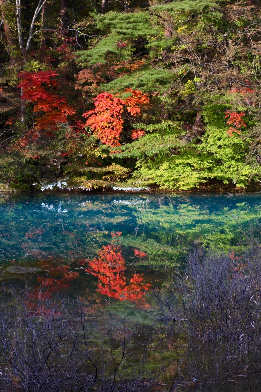 nature, autumn, growth, tree, forest, lake, reflection, water, beauty in nature, leaf, tranquility, plant, outdoors, no people, day