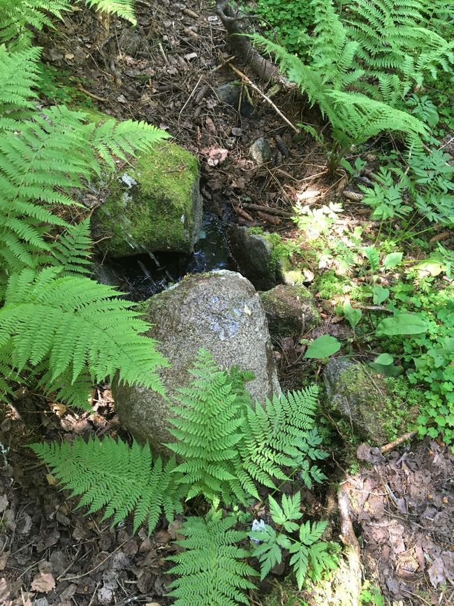 Wet rock Beauty In Nature Close-up Day Forest Park Green Green Color Growing Growth Idyllic Leaf Lush Foliage Moss Nature No People Non-urban Scene Outdoors Plant Rock - Object Scenics Tranquil Scene Tranquility Vitosha Mountain Vitosha National Park Wet Rock Wet Rocks