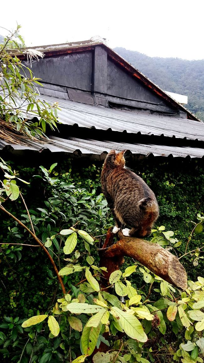 Cat on the tree Taking Photos EyeEm Best Shots Amazing View 猴硐貓村 Traveling Weekend Animals Cat♡ People Watching Relaxing