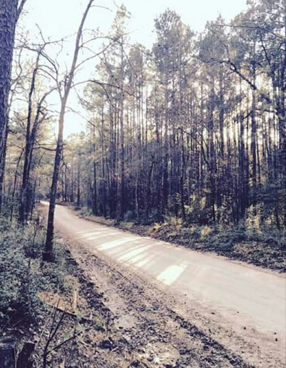 tree, forest, nature, no people, day, outdoors, road, tranquility, tree trunk, scenics, beauty in nature, sky