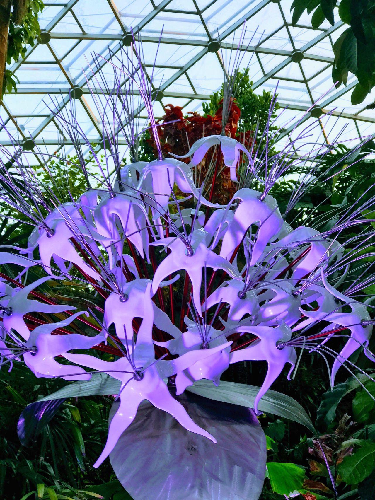 Missouri Botanical Garden Purple Garden Of Glass Glass Art Indoors  Illuminated