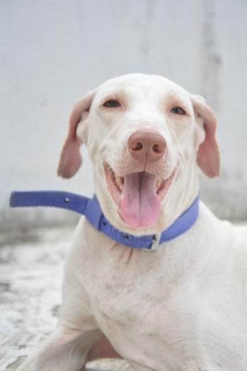 Pet Portraits Dog Domestic Animals Rajapalaiyam Cheerful Wonderful World One Animal