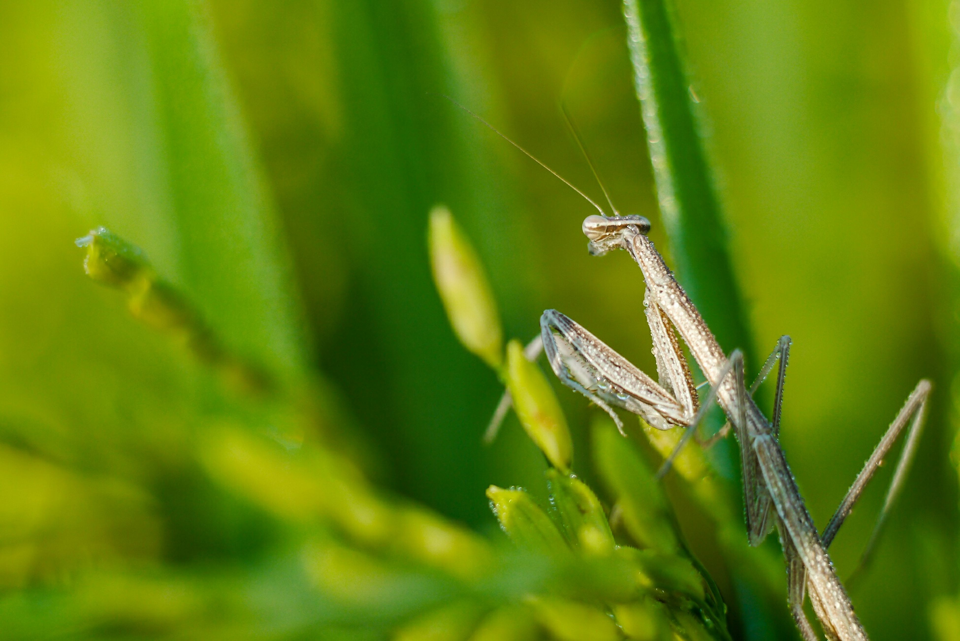 animals in the wild, one animal, animal themes, green color, insect, wildlife, focus on foreground, close-up, dragonfly, plant, nature, grass, blade of grass, selective focus, leaf, growth, day, outdoors, beauty in nature, no people