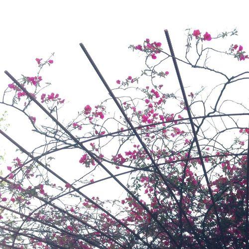 Flowers Enjoying Nature Spring Simplicity