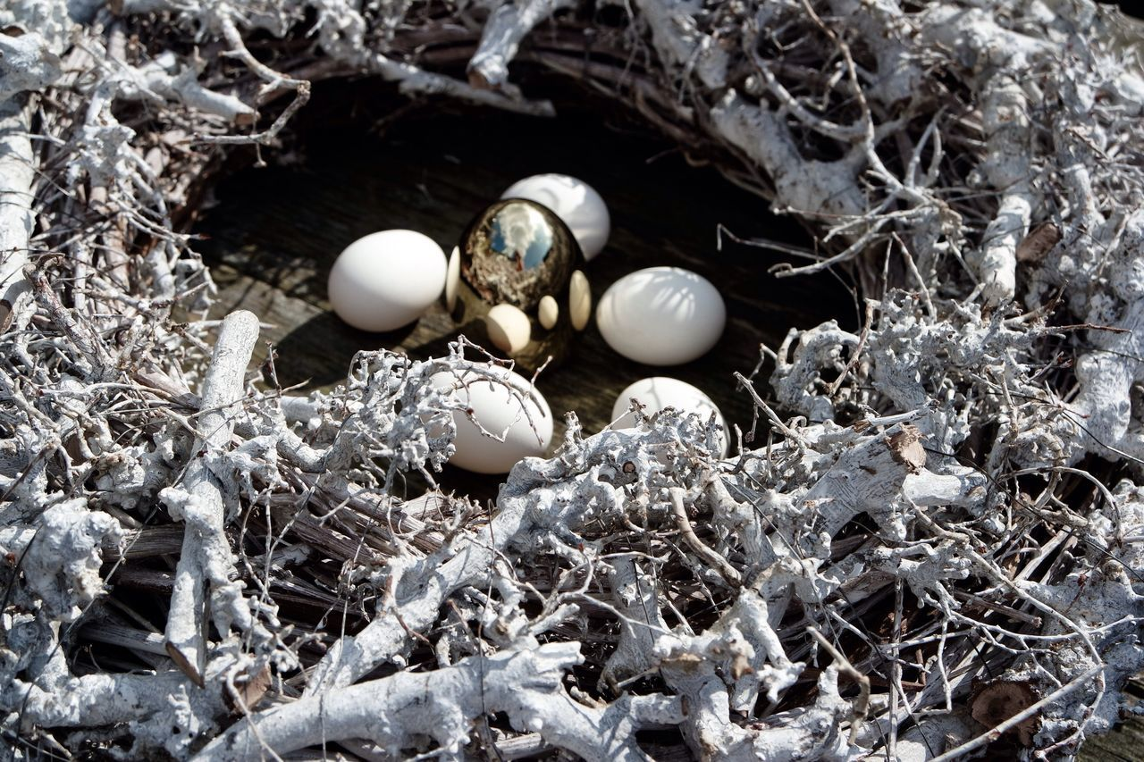 Close-up Fragility Spring Time Decoration Easter Bird Nest Eggs In The Nest Easter Eggs Eggshell Beginnings Animal Nest Eggs For Breakfast Wood - Material Easter Ready Golden Egg Nature
