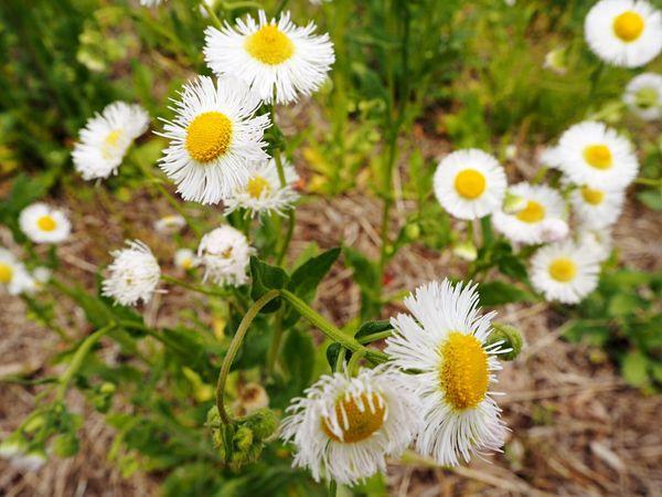 Flower Saitama Nagatoro