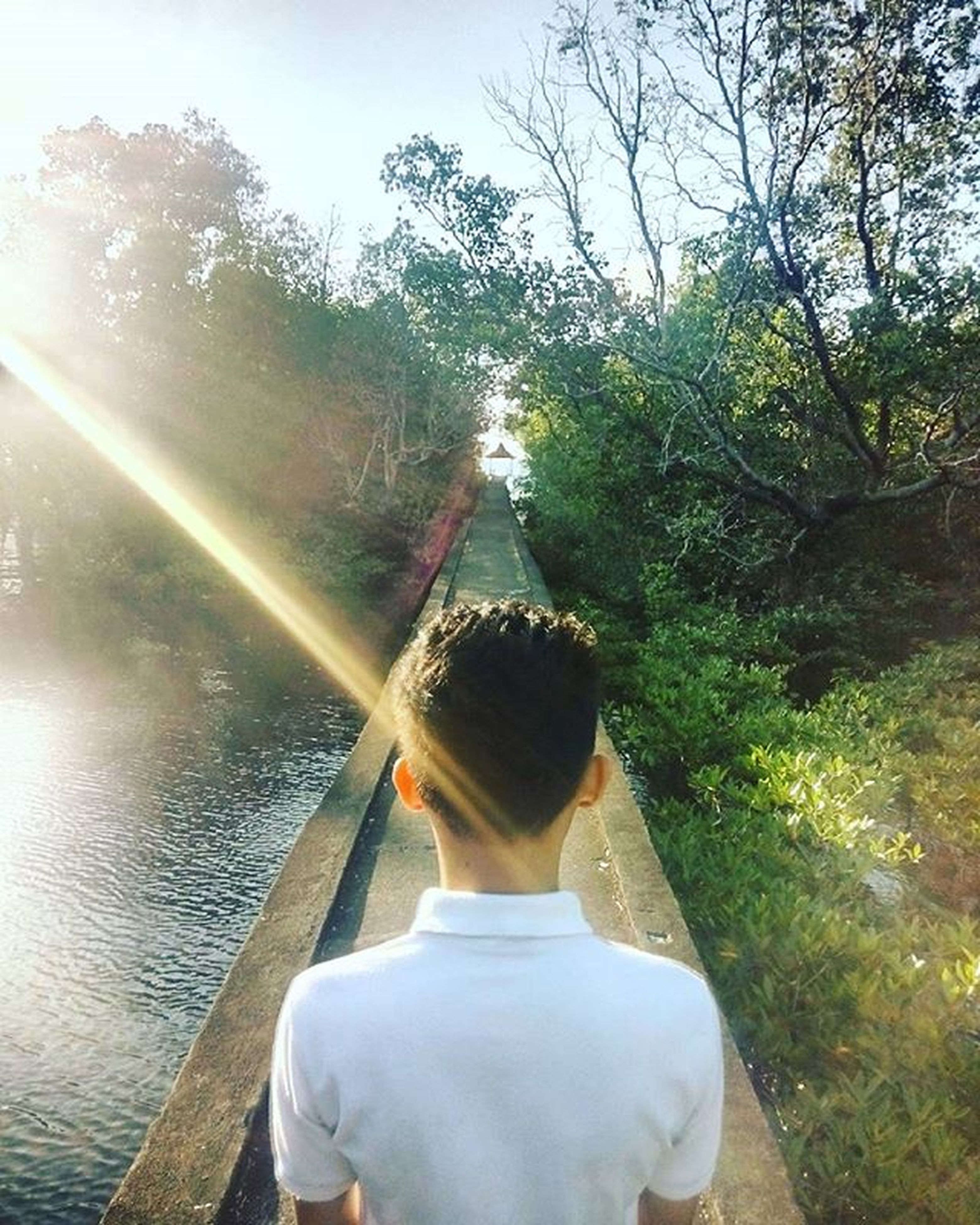 tree, lifestyles, leisure activity, water, casual clothing, sunlight, full length, sunbeam, young adult, rear view, nature, person, standing, sun, growth, lens flare, day, river