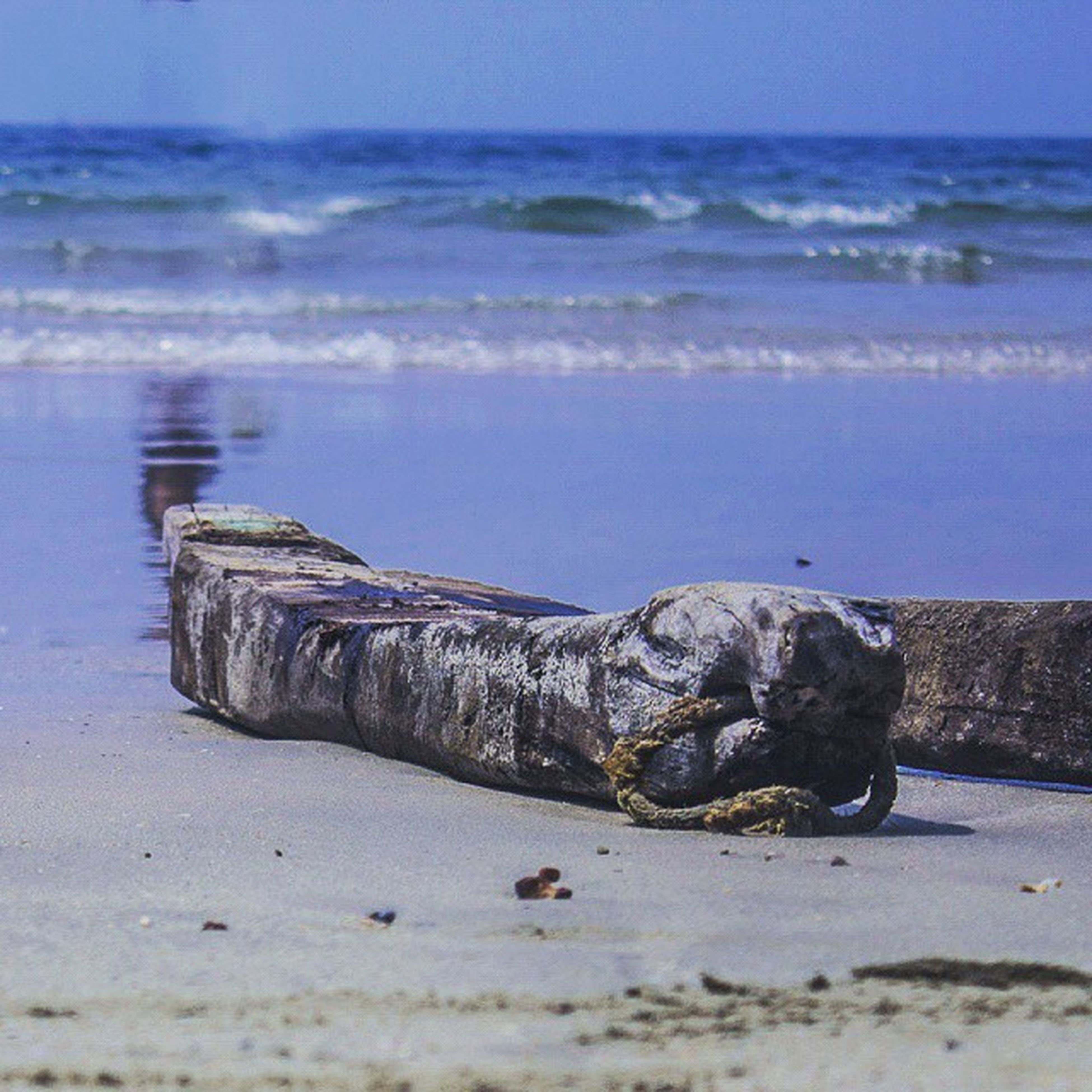 sea, water, beach, shore, sand, horizon over water, animal themes, tranquility, tranquil scene, nature, scenics, one animal, beauty in nature, animals in the wild, sky, wildlife, blue, day, idyllic, outdoors