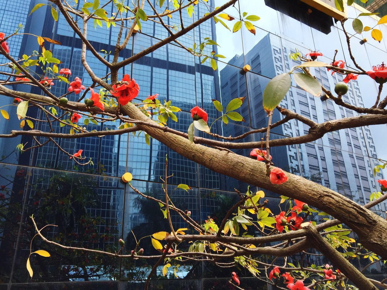 Close-Up Of Fresh Flowers Blooming Against Office Building In Wan Chai