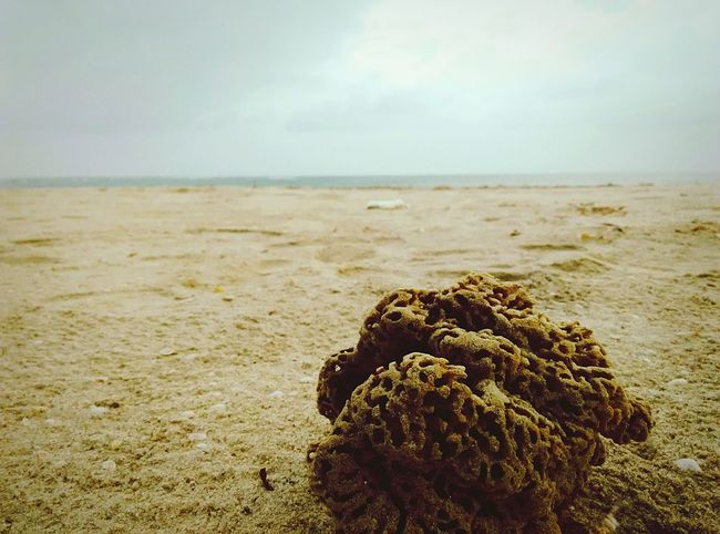 The Traveler - 2015 EyeEm Awards The Tourist Showcase: February Dhanushkodi In Search Of Incredible Rameshwaram Tamilnadu Biketour EyeEm Best Shots From My Point Of View Sea And Sky Q The KIOMI Collection The Great Outdoors With Adobe On The Way