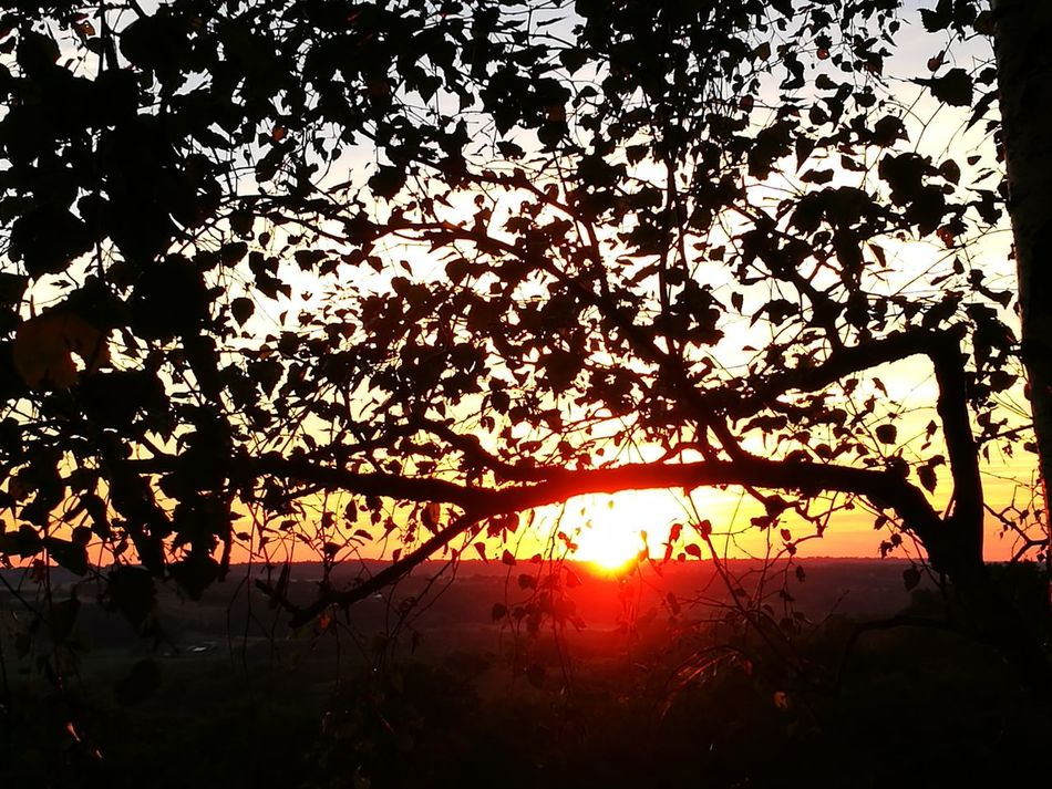 Sunset 🌇 Sunset The Purist (no Edit, No Filter) Orange Color Tree Nature Silhouette Beauty In Nature Sky No People Outdoors Backgrounds Scenics Sun ☀☀☀