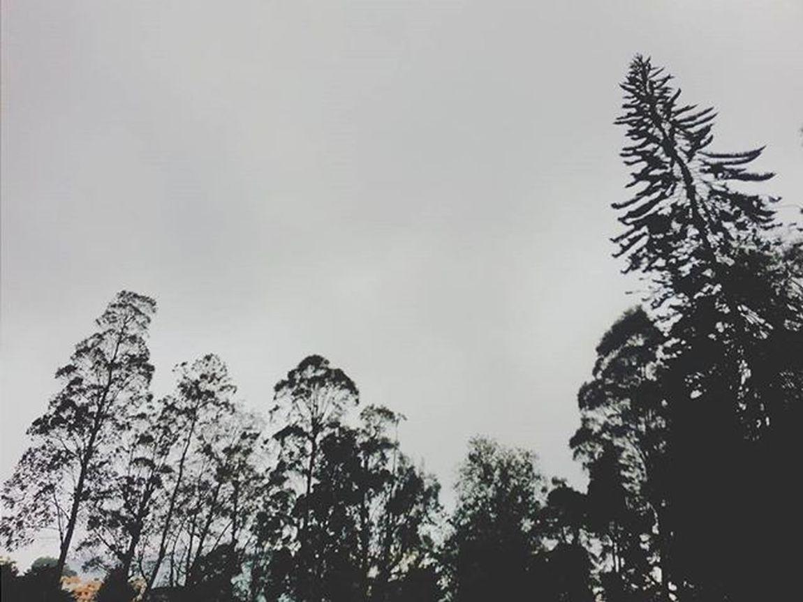 Abstract Monochromatic Trees Treesandsky Tree Greenary Nature Naturelovers Chettiarpark Park Kodaikanal India South Southindia _soi Instatravel Travel Tamilnadu Traveljournal Pixelpanda_india Incredibleindia Picturesofindia Beautifulindia Hippieinhills Indiatravelgram desi_diaries indiaclicks