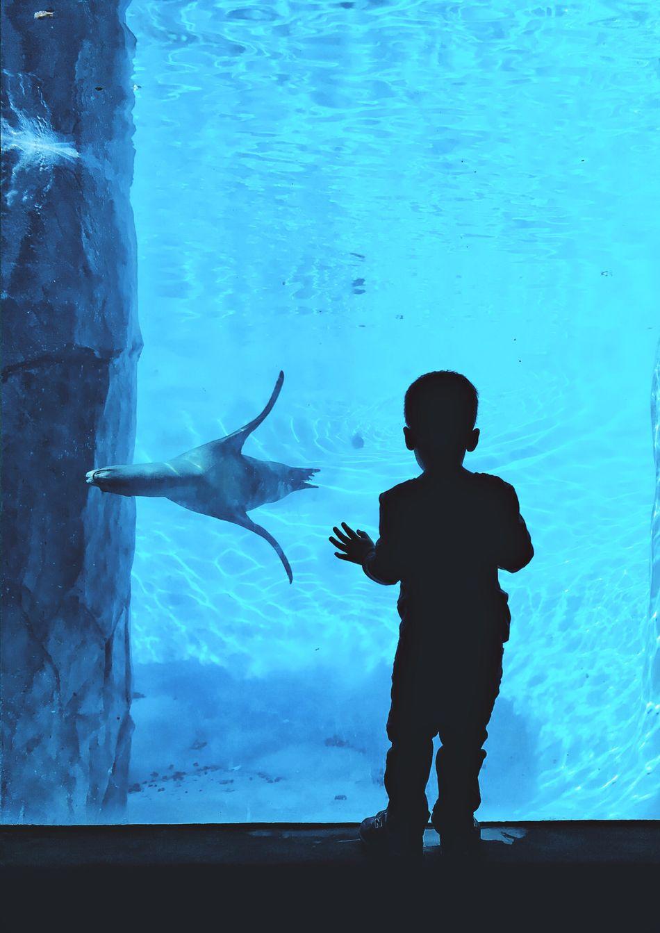 Underwater Dreamer Light And Reflection EyeEm Best Shots EyeEmBestPics EliotAndres Silhouette Underwater Maximum Closeness