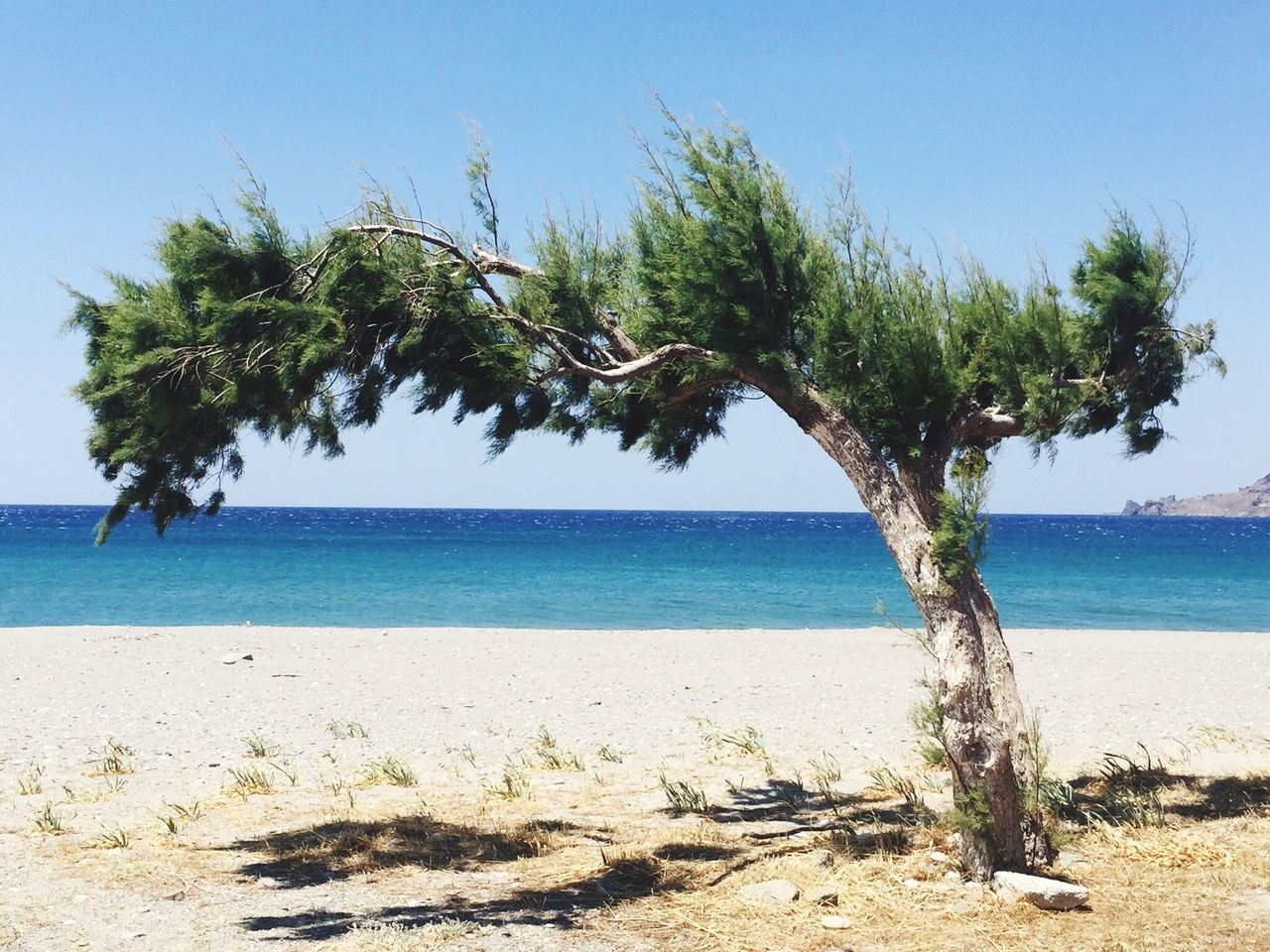 Tree Greece Plakias Beach Sand Shadow EyeEmNewHere