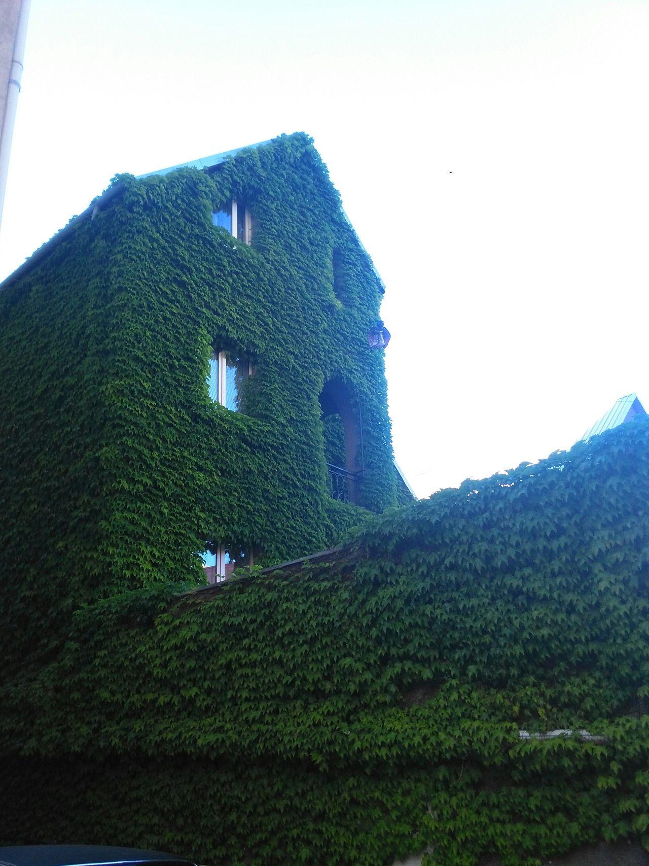 Green house First Eyeem Photo