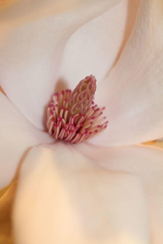 Focus Object Macro Macro Beauty Macro Nature Macro_collection Maximum Closeness Nature Photography Nature_collection Naturelovers Plants