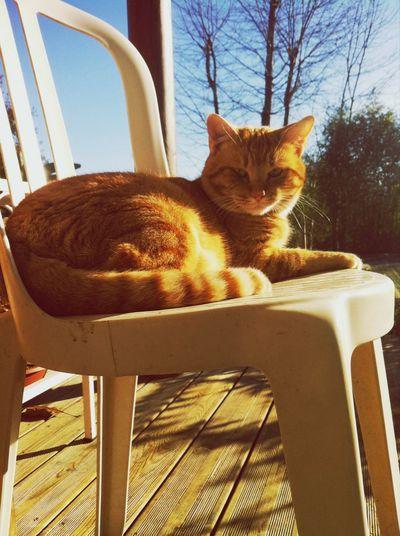 Winter Sun Cat