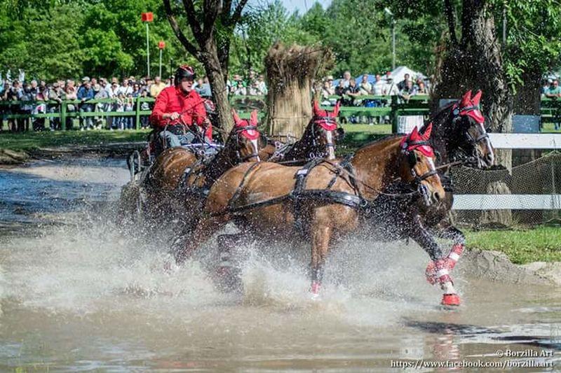 Found On The Roll Horse Photography nikon First Eyeem Photo The Journalist Eyem 2016 Awards