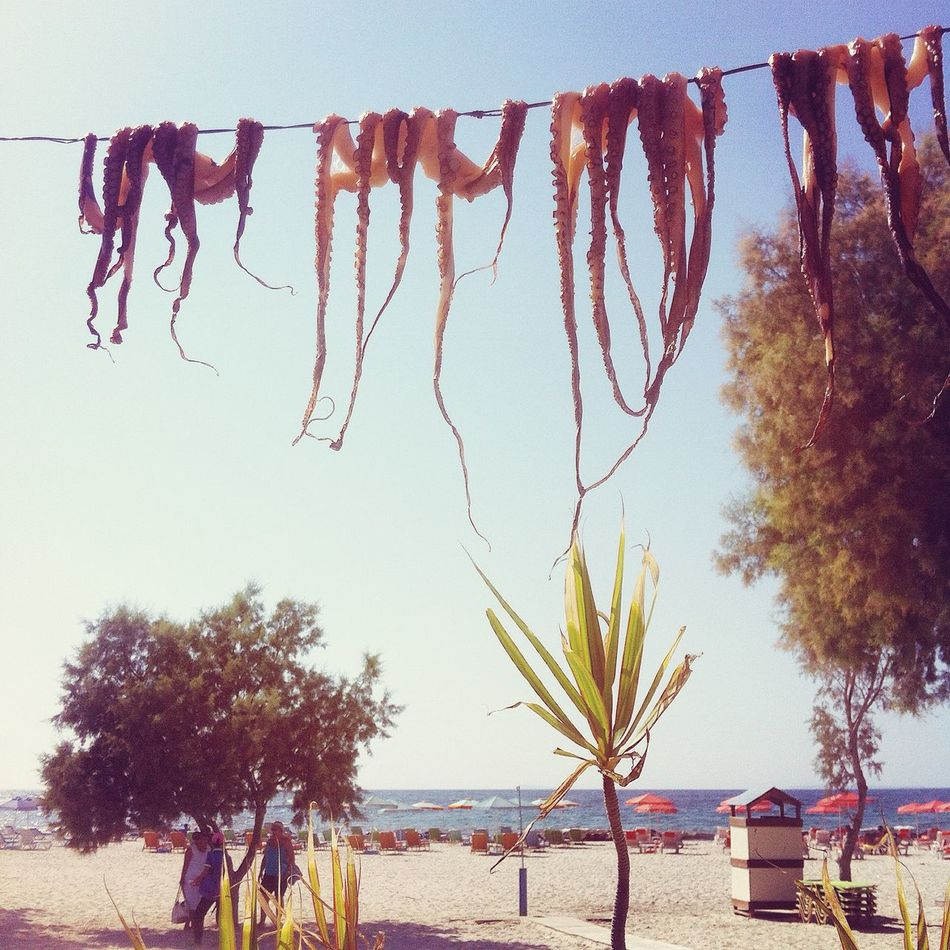 Beautiful stock photos of octopus, Beach, Beauty In Nature, Clothesline, Day