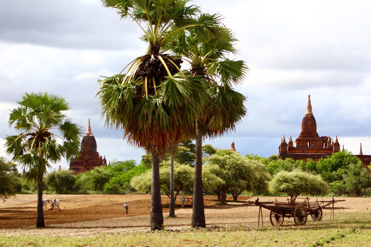 Ancient Ancient Architecture Ancient Civilization Bagan Burma Desert Farm Farm Life Green Color Myanmar Palm Plowed Field
