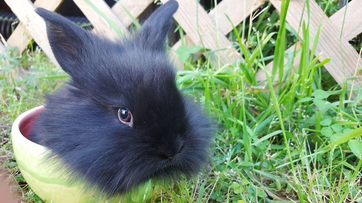 One Animal Domestic Animals Pets Petsofeyeem Bunny  Pet Photography  Rabbit Pet Rabbit Portrait Looking At Camera Animal Kit