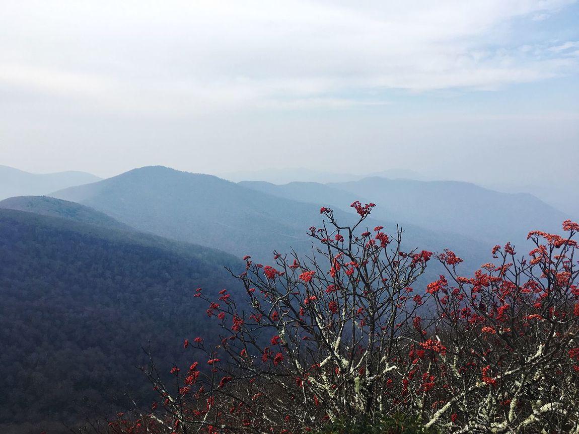 Blue Ridge Parkway | Asheville, NC Mountain Nature Beauty In Nature Flower Mountain Range Outdoors Landscape Hike North Carolina Asheville, NC Asheville Blue Ridge Parkway