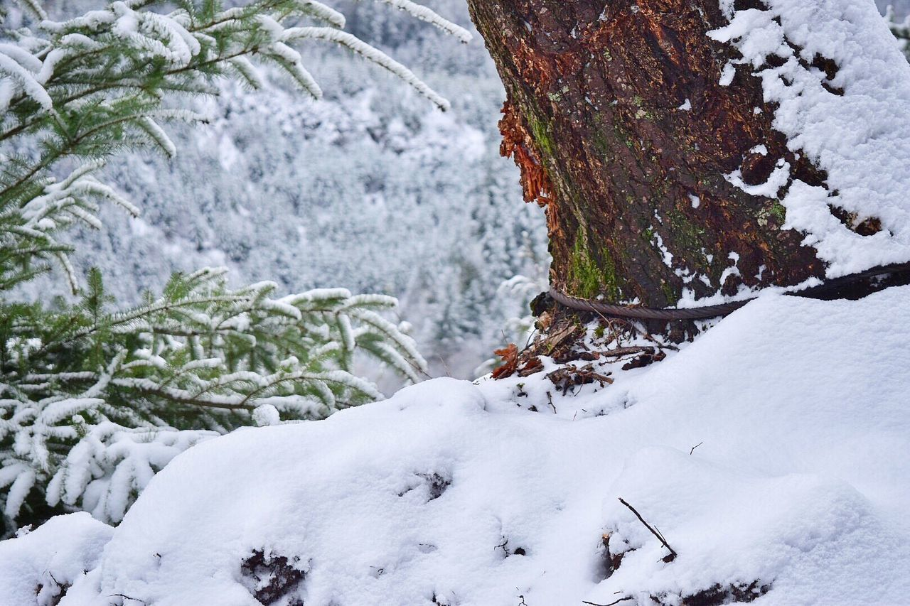Snow Winter Cold Temperature White Color Tree Nature Beauty In Nature Forest Outdoors Day No People Logging Roads Mountains Snow Covered Snow ❄ Cable Choker Frozen Tree Stump Tail Hold Logging Winter Mountain