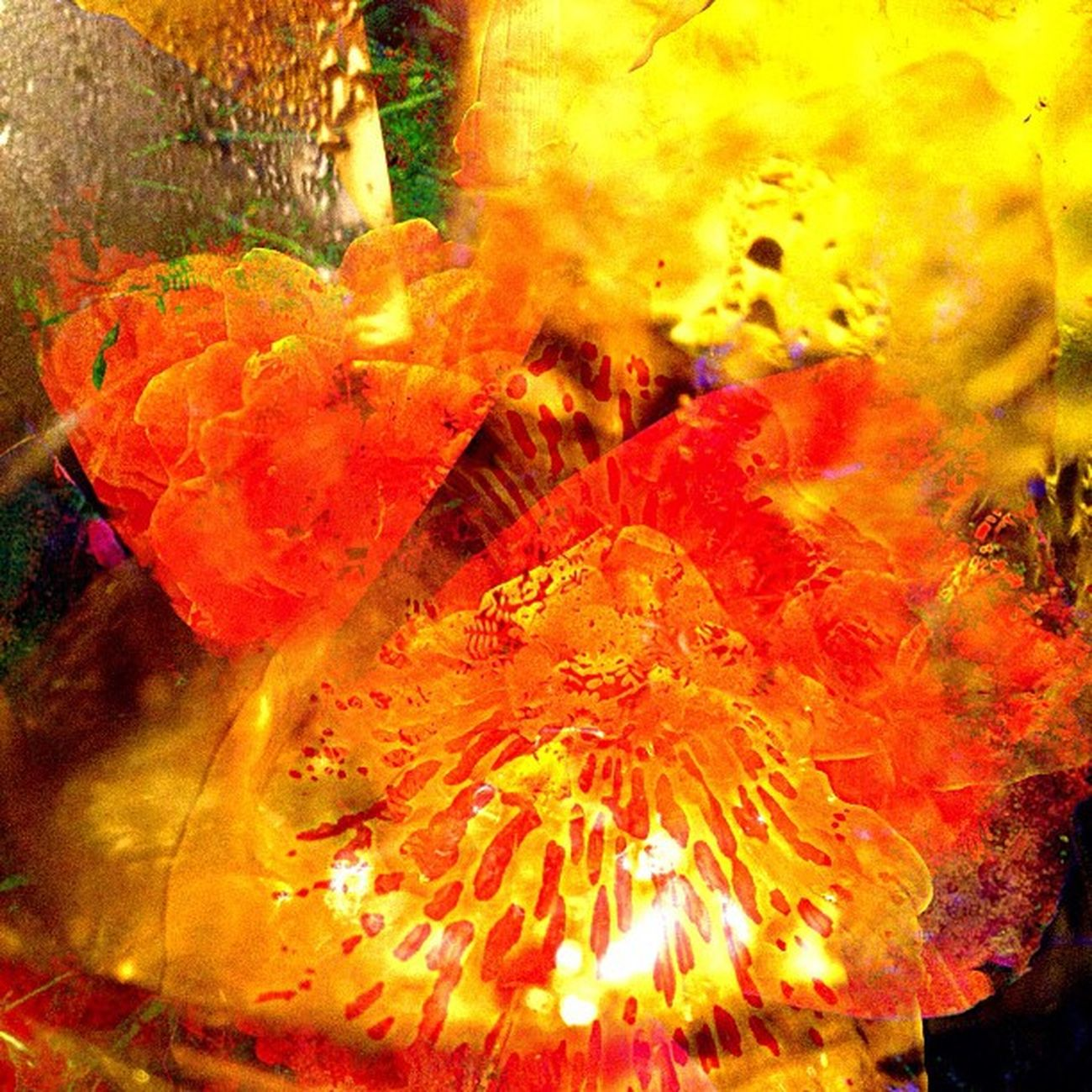 The Colors of Joy & Gratitude (1 of 3) Dedicated to all those who follow and shower me with loving sentiments. You make my days brighter Ig_captures Happycolortrip Abstracto Coloronroids All_shots Orangewednesday StayABSTRACT Dhexpose Abstractart Ace_ Gang_family Deadlydivas Editjunky Ig_one Mobileartistry Icatching Instauno Femme_elite Igsg Weareinheaven Bd You_nique_edits Abstracters_anonymous Mi55flowerz Abstract_buff Edit_fever Abstractobsession Jj_forum_0541 Instaabstract