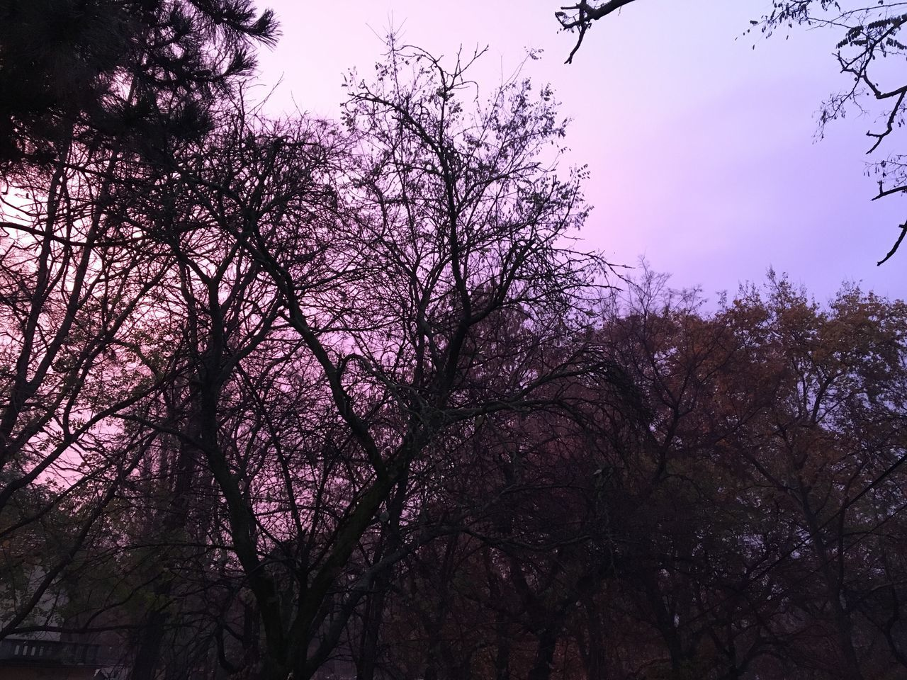 ☂️🍆🌄🔮💜 Nature Sky Outdoors Day Beauty In Nature Purple Sky Purple Withphone No People Budapest, Hungary Margaret Island Nophotoshop