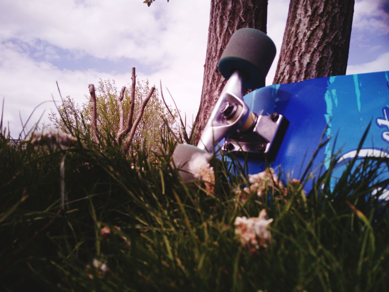 Grass Cloud - Sky Sky Outdoors Flower No People Nature Day Plant Close-up Original Nature_collection Beauty In Nature Longboard Red Forest Tree Trunk Plant First Eyeem Photo Pařez Nature Longboard <3 Longboarding Long Longboards