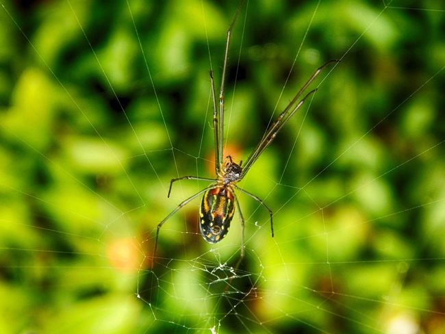 Animal Markings Beauty In Nature Close-up Focus On Foreground Fragility Insect Outdoors Spider Spider Web Web Wildlife