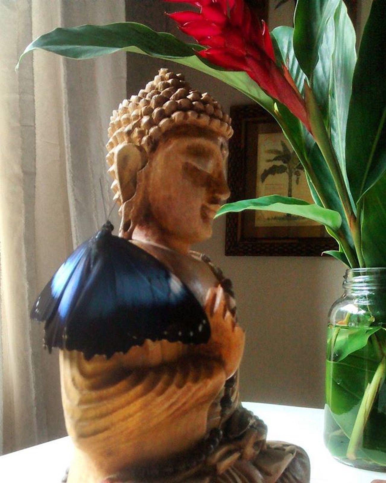 Buda recebeu visita especial hoje em casa. Momentos de reflexão!!! 🙇✌🌱☆♡ Surpresadodia Aconteceuhojeisso