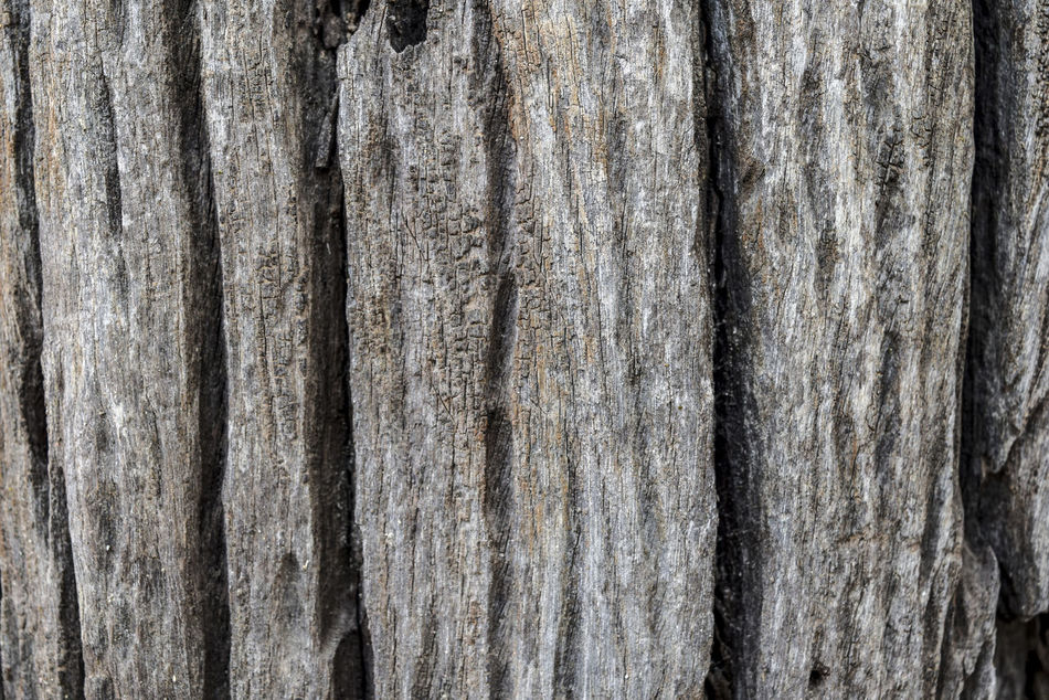Backgrounds Close-up Day Full Frame Hardwood Nature No People Outdoors Pattern Textured  Timber Tree Tree Trunk Weathered Wood - Material