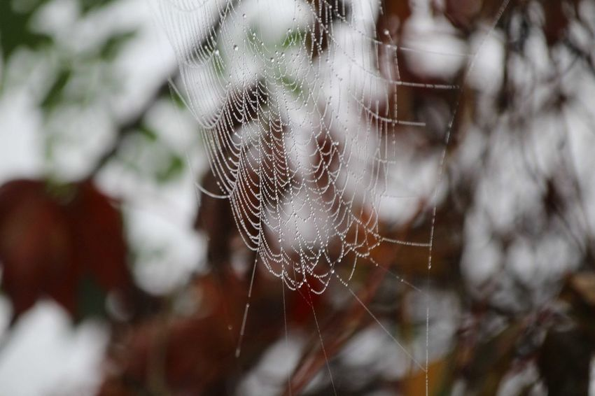 Shades Of Winter Spider Web Trapped Web Nature Focus On Foreground No People Spider Close-up Fragility Day Outdoors Beauty In Nature Freshness
