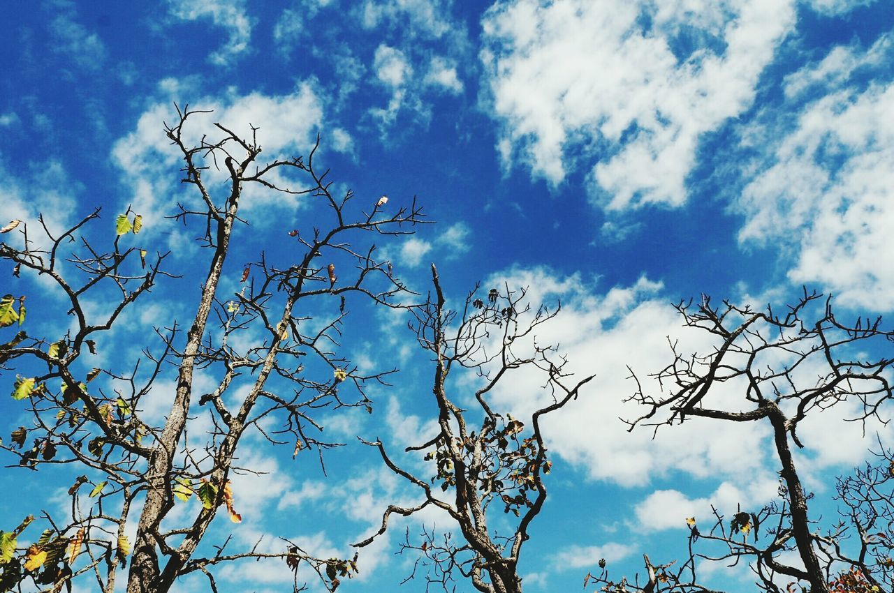 sky, low angle view, branch, nature, tree, bare tree, cloud - sky, day, no people, outdoors, beauty in nature, blue, growth