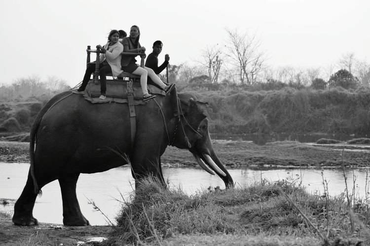 Adventure Riding Two People Outdoors One Animal Sitting Elephant Full Length Day Mammal People Young Adult Adults Only Sky Adult