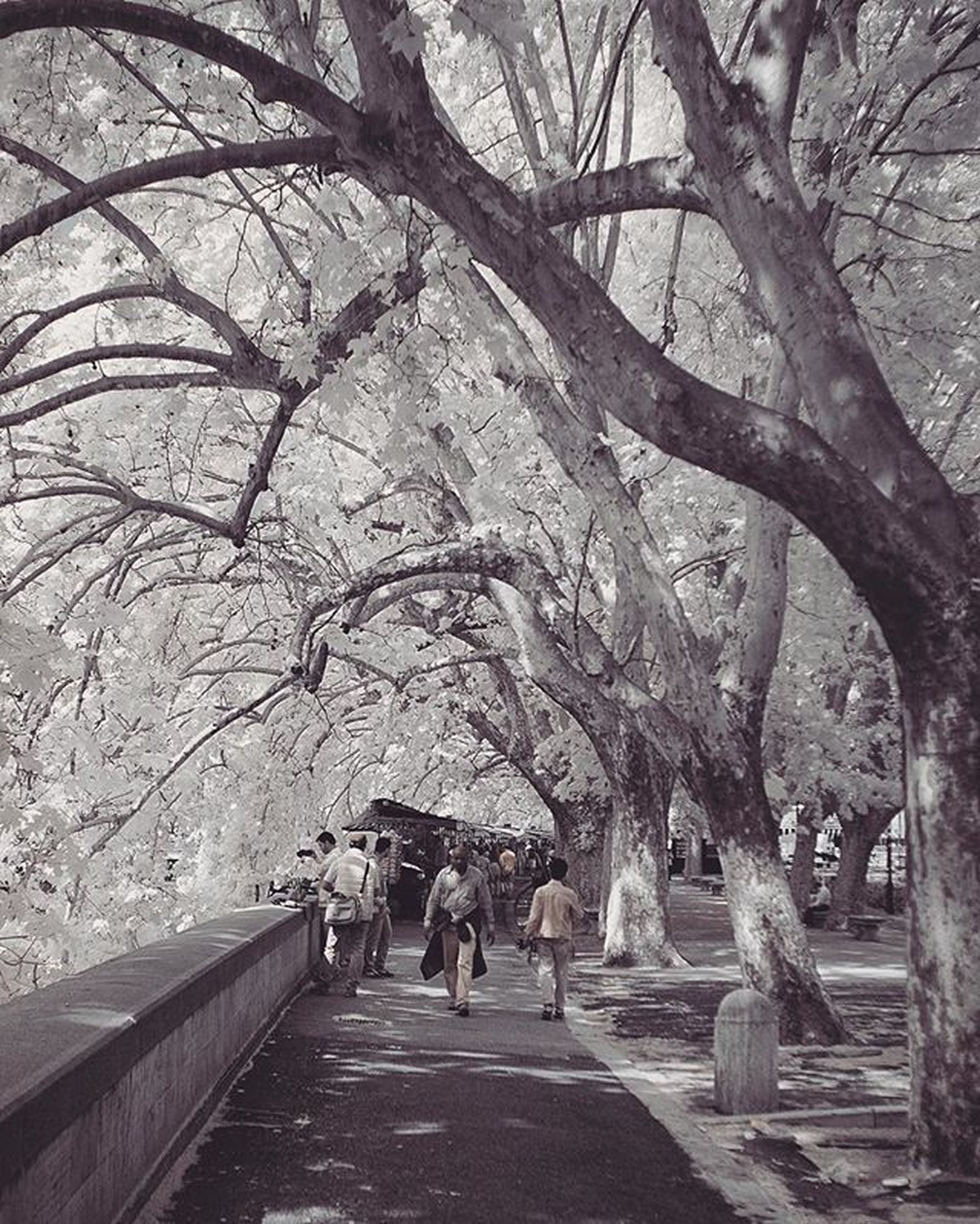 walking, the way forward, tree, men, lifestyles, person, rear view, full length, leisure activity, footpath, diminishing perspective, togetherness, branch, bare tree, vanishing point, treelined, street, walkway