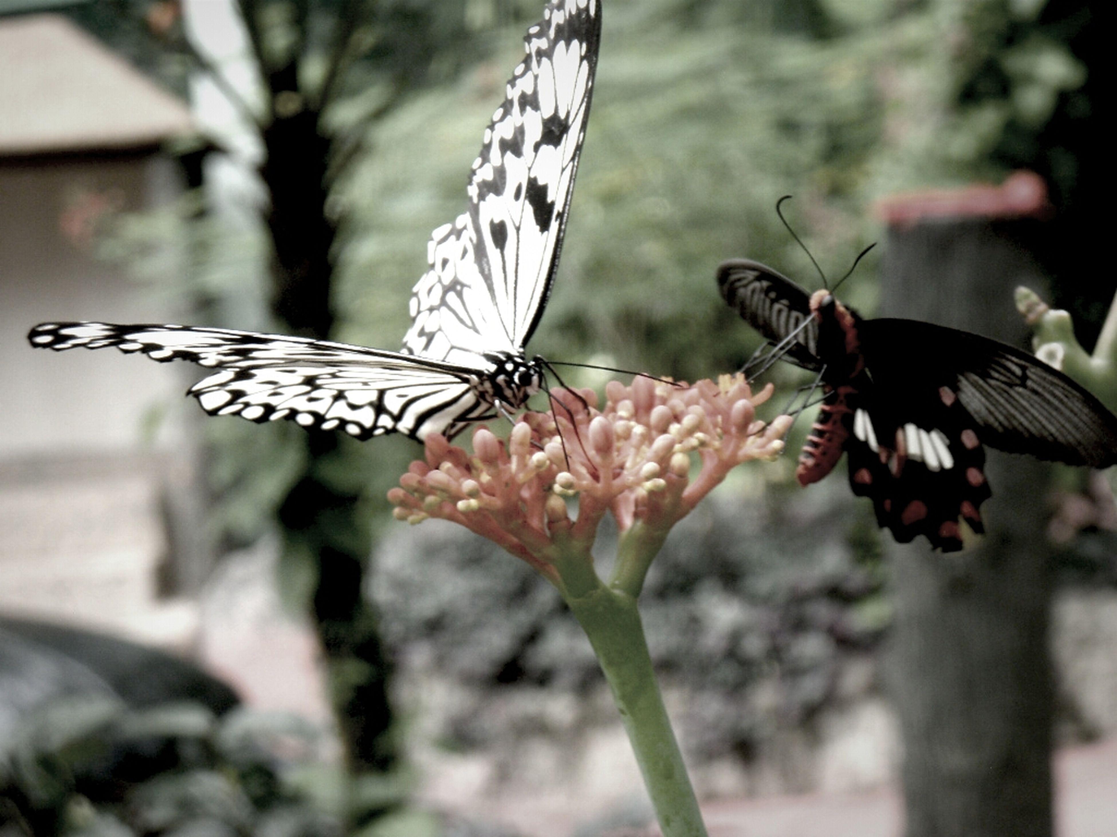 Taking Photos Enjoying The View Butterfly Butterflies Win An EyeEm T-Shirt