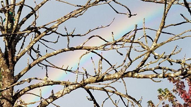 Pray For Peace♡ Beauty In Nature Tranquility Bare Tree Rainbow Sky Taking Photos Showcase September The Week On Eyem Hello World TakeoverContrast Eyeemphoto Fresh On Eyeem