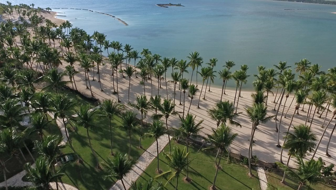 Palm Tree Nature Tree Outdoors No People Water Nature Photography Aerial View EyeEmNewHere Beachphotography Dominican Republic Caribbean Sea Santodomingo Ocean Photography Dronephotography Amazing Scenery Dronepic Over Water Beauty In Nature Travel Destinations Caribbean Palm Tree Vacations Coastline Growth