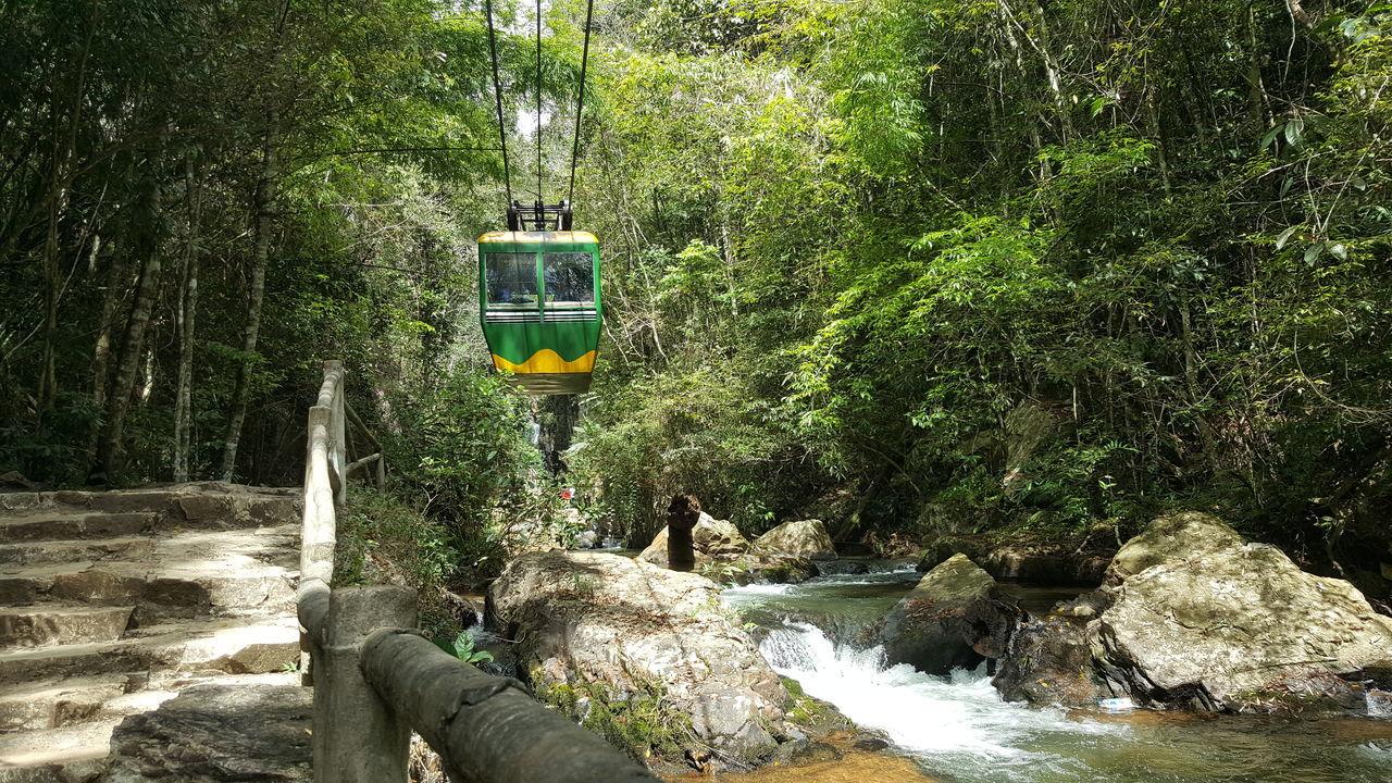Tree Nature Green Color Outdoors Waterfall Brook Cable Car Cabin Transportation Sling Move Dalat DaLatcity Vietnam