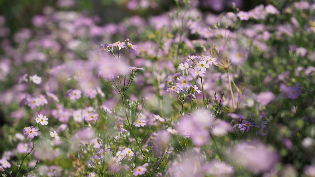 EyeEm Best Shots Spring Beautiful Nature Flowerlovers EyeEm Nature Lover Flower Photography Purple Flower