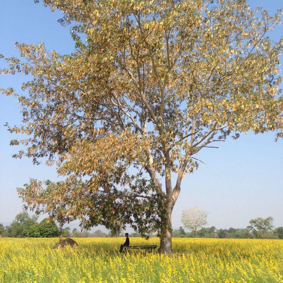 Hello World Thailand Nature Enjoying Life ระหว่างทาง Backpacking Alone Yellow Flower
