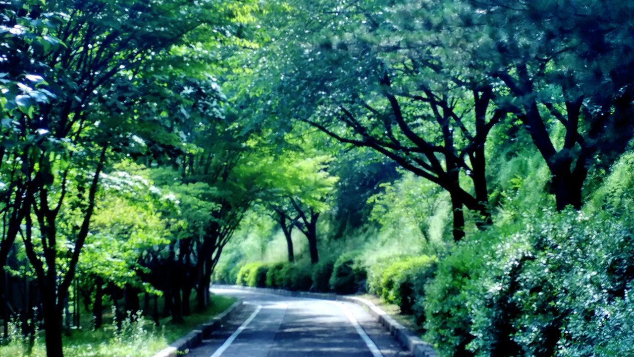 Green Nature Forest Trees Forest Drive