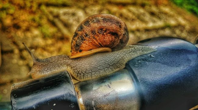 Nature At My Doorstep Samsungphotography Samsung Galaxy S5 Mobilephotography Mobile Photography Smartphonephotography NL Voorthuizen Slak Snail Photography Snail Collection Snail Nederlandse Natuur Naturephotography Snailtrail Slakkenspoor