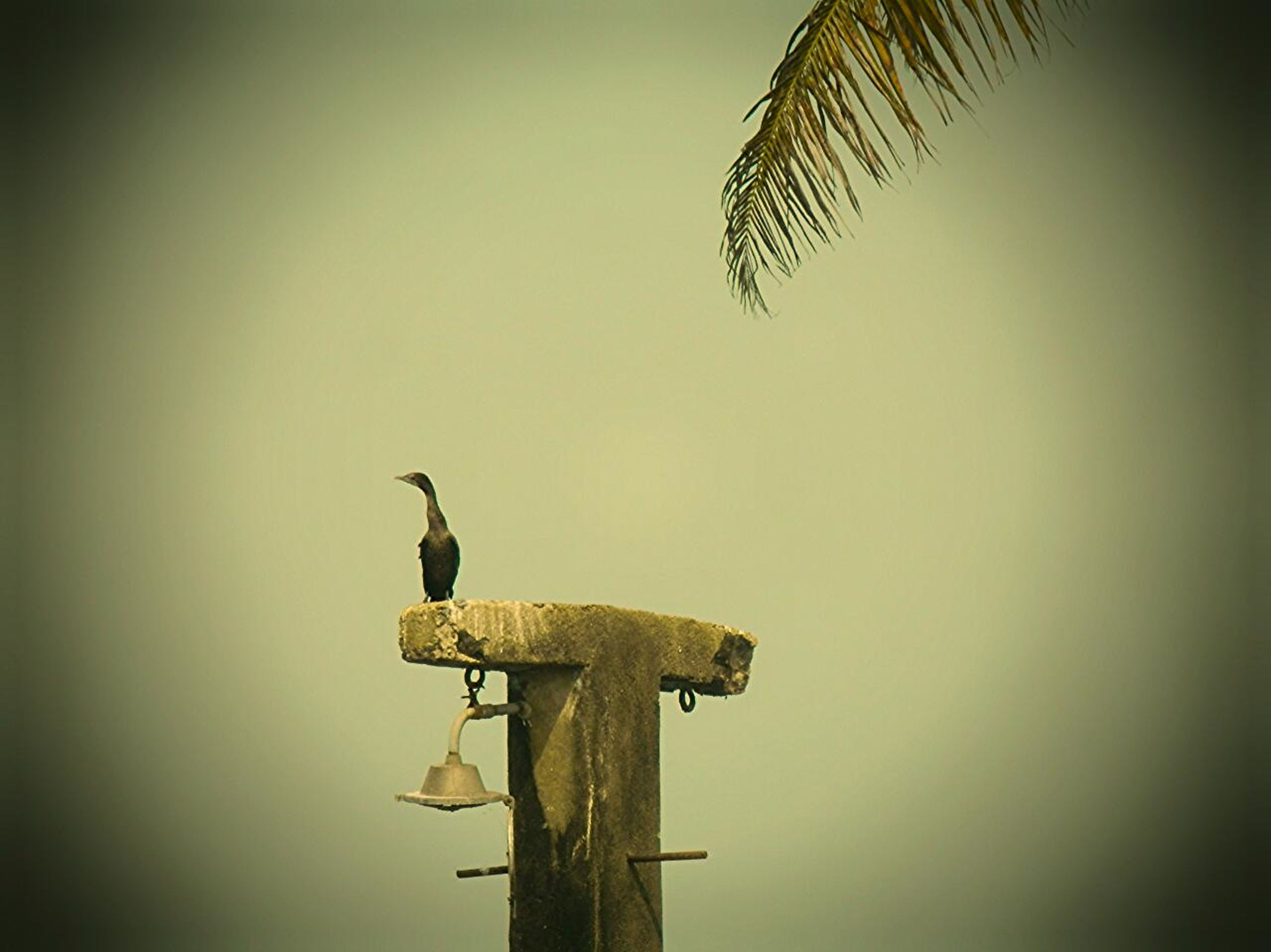 bird, animal themes, animals in the wild, low angle view, wildlife, clear sky, silhouette, one animal, perching, flying, copy space, spread wings, sky, mid-air, full length, two animals, nature, dusk, outdoors, no people