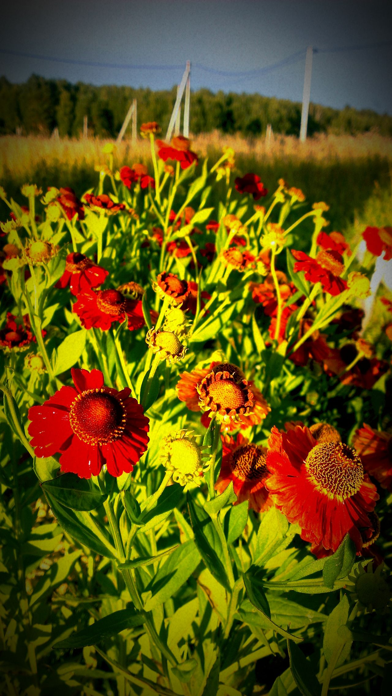Flowers Sun