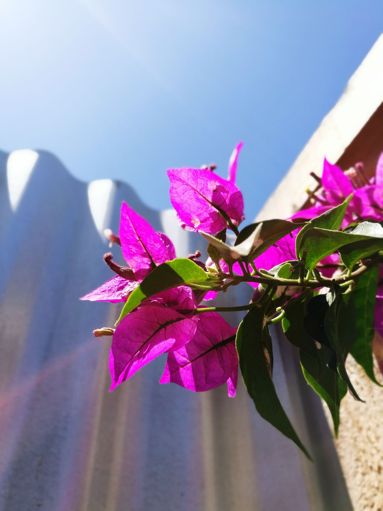 Flower Fragility Orchid Nature Plant Pink Color Beauty In Nature Purple Freshness Petal Flower Head Growth Close-up Water Bougainvillea No People Sky Day Indoors  Rhododendron Flowers Flowers,Plants & Garden Flowers, Nature And Beauty Flowers_collection